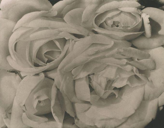 Tina Modotti, Rosas, 1924