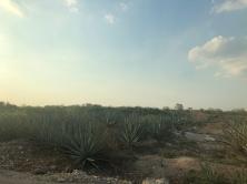 Camino a San Crisanto, Yucatán-México